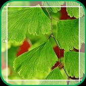 Green Ginkgo icon