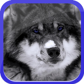 Lonely Wolf icon