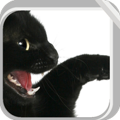Lovely Black Cat icon