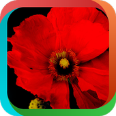 Red Flowers icon