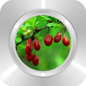 Red Sweet Dates icon