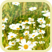 Summer Flower Sea icon