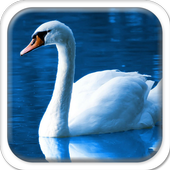 Swans on the Lake icon