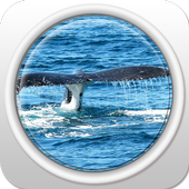 The Tail of The Whale icon