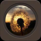 The Beautiful Dandelion icon