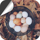 The Eggs in the Basket icon