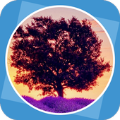 Tree in Picture icon