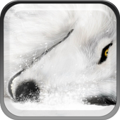 Wolves In the Snow icon