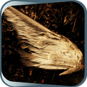 Yellow Wings icon