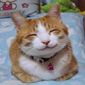 HelloPurr icon