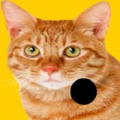 Ball Bouce (Beta) icon