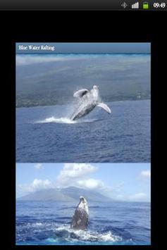 Blue Water Rafting screenshot 4