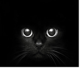 Cat song icon