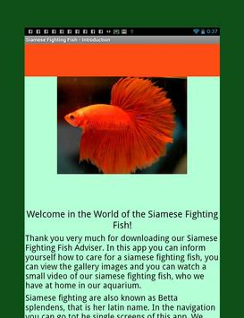 Siamese Fighting Fish Guide poster