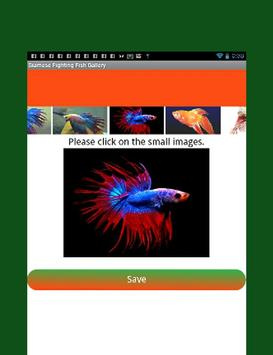 Siamese Fighting Fish Guide screenshot 11