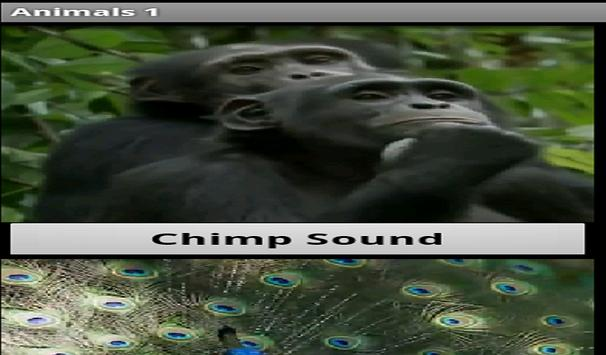 Animal Sounds App screenshot 6