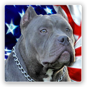American Bully News icon