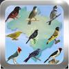 Canto de Pássaros Brasileiros simgesi