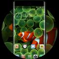 Theme for Original iPhone Clownfish Wallpaper HD