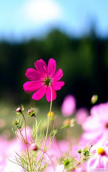Wildflowers Live Wallpaper apk screenshot