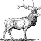 Elk Sound icon