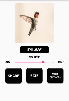 Hummingbird Sound apk screenshot
