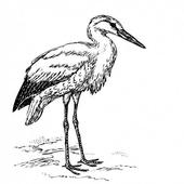 Stork Sound icon