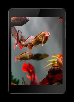 Aquarium 3D screenshot 2