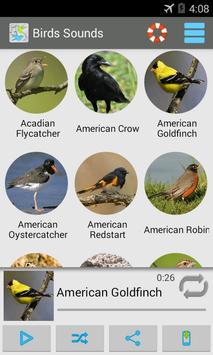 Birds Sounds 200+ poster