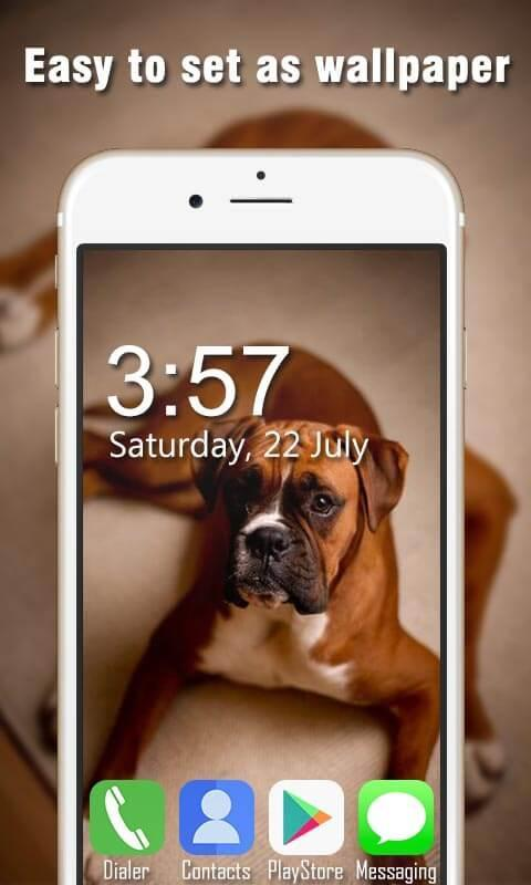 Boxer Dog Live Wallpapers Hd For Android Apk Download