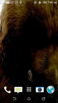 Bear Slap Video Wallpaper screenshot 3