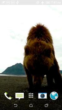 Bear Slap Video Wallpaper screenshot 1