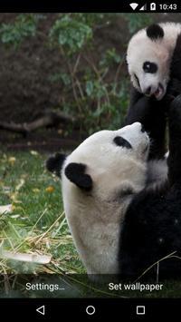 Panda Live Wallpaper HD apk screenshot