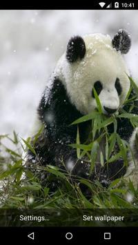 Panda Live Wallpaper HD poster