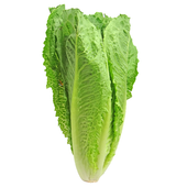 Romaine Lettuce For Health icon