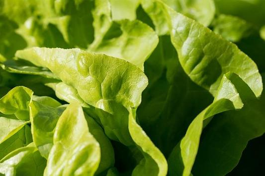 Romaine Lettuce For Health poster