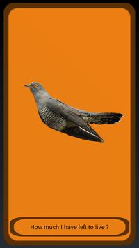 Cuckoo apk screenshot