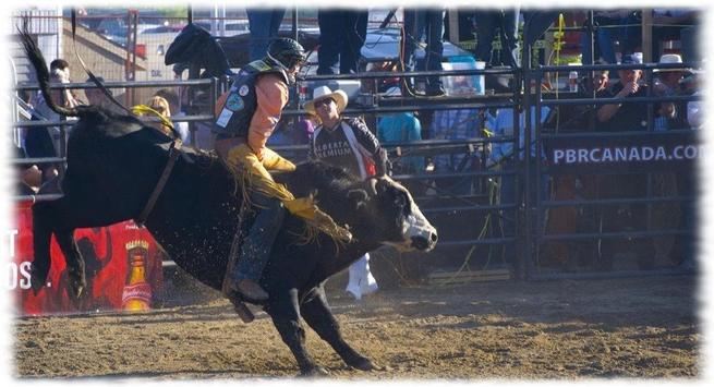 Bull Riding Wallpaper Pics screenshot 2