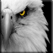 Eagle River App icon