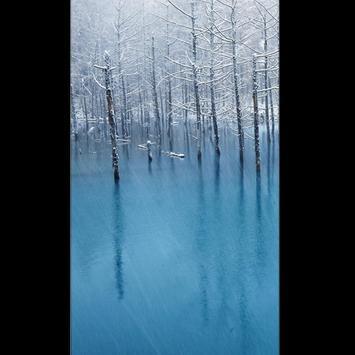 Birch Tree Wallpaper HD screenshot 3