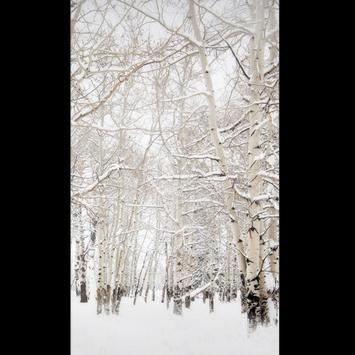 Birch Tree Wallpaper HD screenshot 5