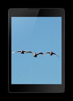 Birds 3D Wallpaper screenshot 7