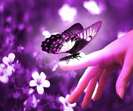 Purple Butterfly Wallpapers poster