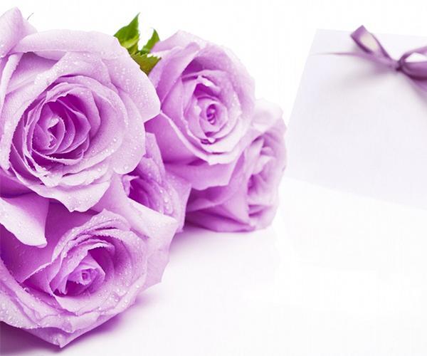 Android 用の 紫色のバラの壁紙 Apk をダウンロード