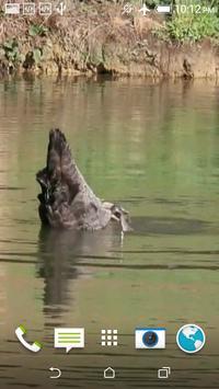 Black Swan Video Wallpaper screenshot 1
