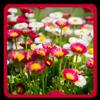 Blooms Bright Live Wallpaper icon