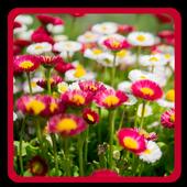 Blooms Bright Live Wallpaper иконка