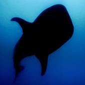 Marine Megafauna icon