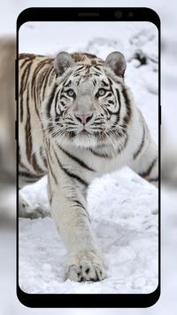 White Tiger Wallpaper screenshot 6