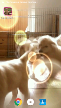 Retriever Video Wallpaper screenshot 3